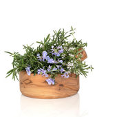 Rosemary and Thyme Herbs — Stock Photo