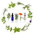 Medicinal and Culinary Herbs - Stock Photo