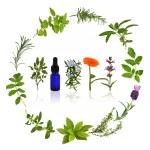 Medicinal and Culinary Herbs — Stock Photo