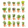 Twenty Herbs in Pots with Leaf Sprigs — Stock Photo