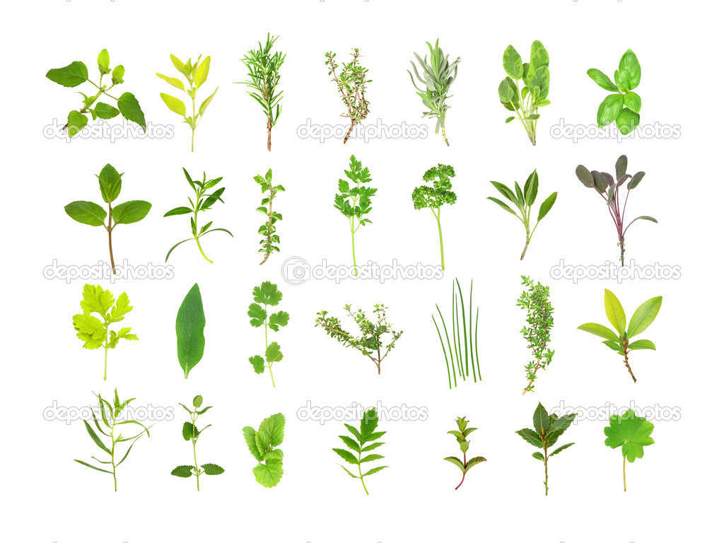 Large herb leaf selection, over white background.   — Stock Photo #2084135