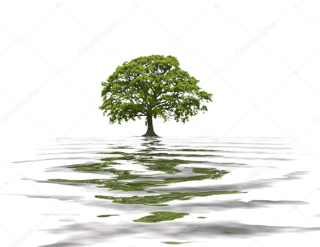 Oak tree abstract in summer with reflection in rippled grey water, over white background. — Stock Photo #2088660