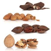 Nut Selection — Stock Photo