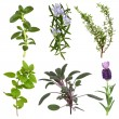 Herb Leaf Collection — Foto de Stock