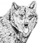German Shepherd Dog — Stock Photo #2660825