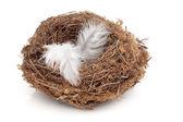 Flown the Nest — Stock Photo