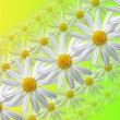 Stock Photo: Flowers linear composition