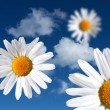 Flowers on heavenly sky — Stock Photo