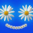 Smiling marguerite — Stock Photo