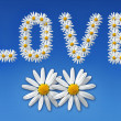 Love flowers — Stock Photo #2004545