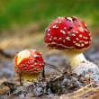 Toadstools — Stock Photo #2011785