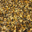 Autumn leaves texture — Stock Photo