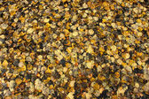 Feuilles d'automne texture — Photo