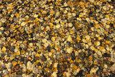 秋天的树叶纹理 — 图库照片