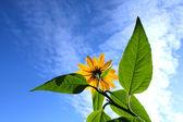 Flowers on heavenly sky — Stock Photo