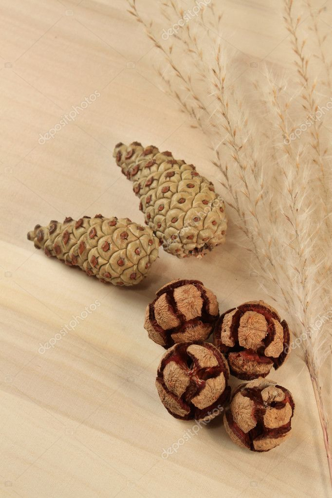 Autumn cones composition beige tones — Stock Photo #2029786