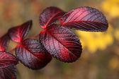Dzika róża autumn odchodzi — Zdjęcie stockowe