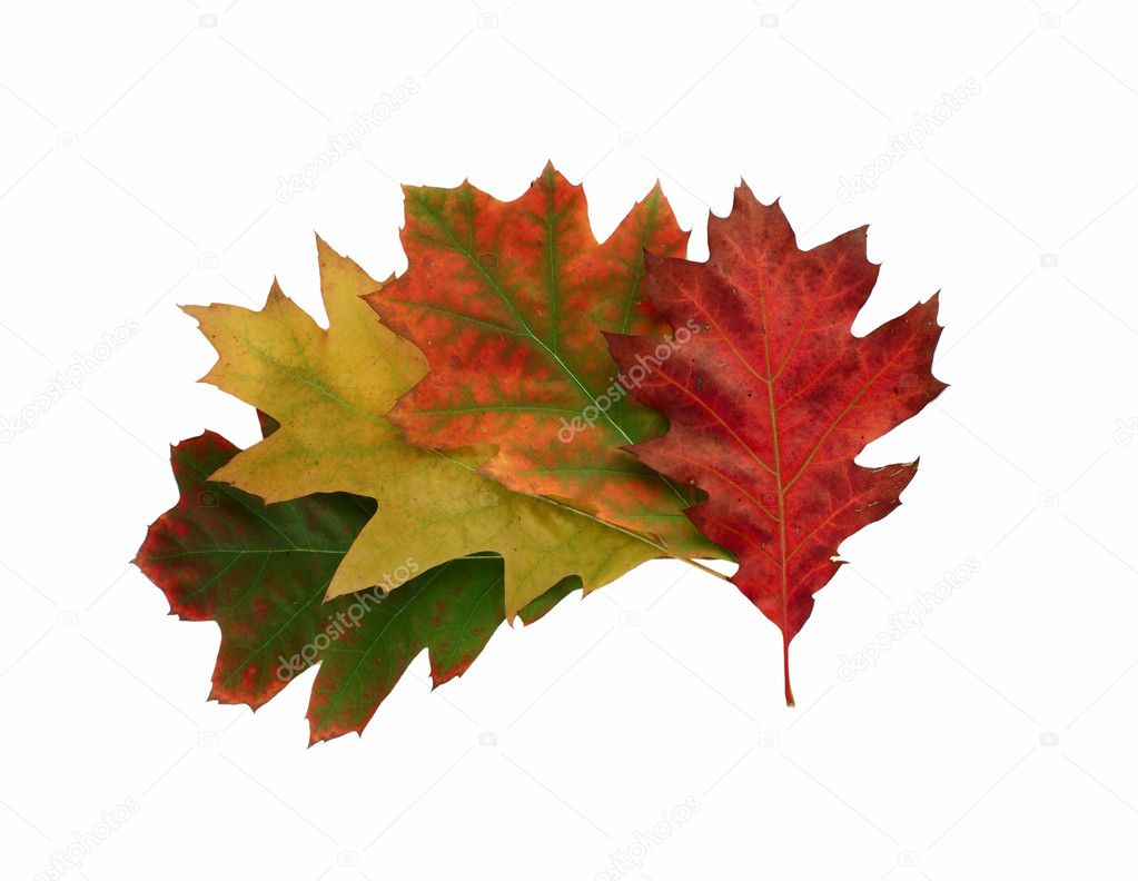 秋天的树叶 - 图库图片