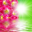 Flowers water and sun — Stock Photo