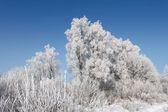 Winter scene - forest covered with snow — Stock Photo