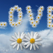 Love flowers — Stock Photo