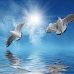 White birds Flying to Sun — Stock Photo #2311671
