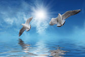 White birds Flying to Sun — Stock Photo