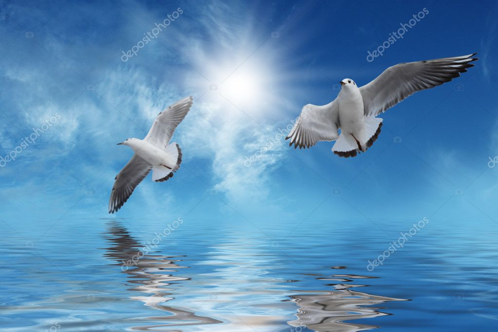 Beautiful white bird flying - photo#14