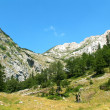Durmitor National Park — Stock Photo #1977223