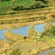 Terrace rice fields — Stock Photo #1990528