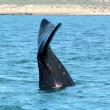 Whale tail — Stock Photo #2037045