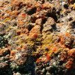 Volcanic lava — Stock Photo #2057437