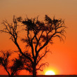 Sunset in Namibia — Stock Photo #2059996