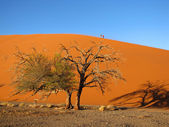 Dune and trees — Stock Photo