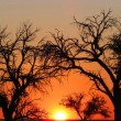 Stock Photo: Sunset in Namibia