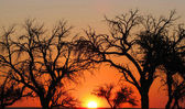 Sunset in Namibia — Stock Photo