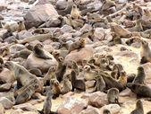 Seals — Стоковое фото