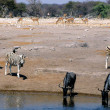 Animals at waterhole - Stock Photo