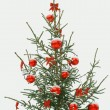 Christmas tree — Stock Photo #2060279