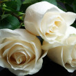 Foto Stock: Three white roses on black