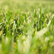 Green grass close view — Stock Photo