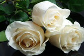 Three white roses on black — Stock Photo