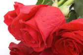 Close view of wet red roses — Stock Photo
