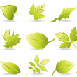 Leaf Icons — Vector de stock #1979619