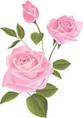 Rosa — Vector de stock