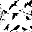 Vector de stock : Bird Set