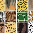 Stock Vector: Animal Skins