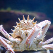 Big crab — Stock Photo