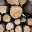 Piles of wood — Stock Photo