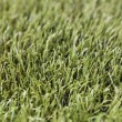 Artificial grass — Stock Photo #2006697